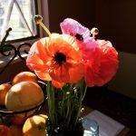 My daughter's concert flowers basking in kitchen sunshine.