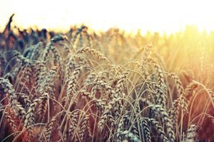 While Shavuot is technically a strictly agricultural holiday, we appropriated its meaning to become magnificent, about receiving the Torah at Sinai. We can infuse every day with meaning.