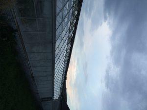 dilapidated greenhouses on Belle Isle