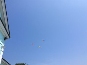 Can you see the brilliant kites in the gorgeous blue sky? Almost too far away to spot, but they are there. I promise.