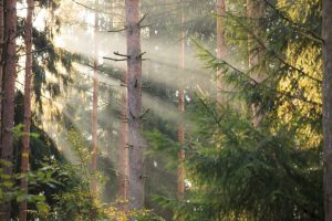 Sun rays in the middle of forest