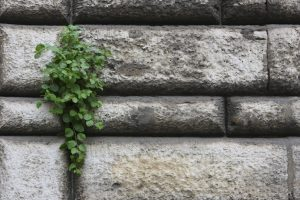Plant-Growing-Out-of-a-Crack-000009994403_Large
