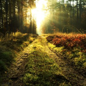 Autumn-forest-rays-of-light-road-000058720686_Large