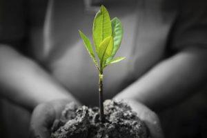 Hand-Holding-Plant-000058033312_Medium