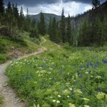 Hiking-trail-in-Rocky-Mountains,-Colorado-000010895833_Medium